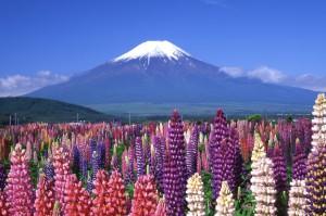 富士山初夏 トリミング