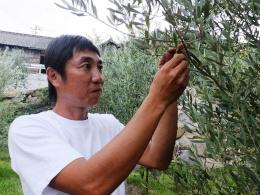 3-3-DSCF2744-山田さんとオリーブの木