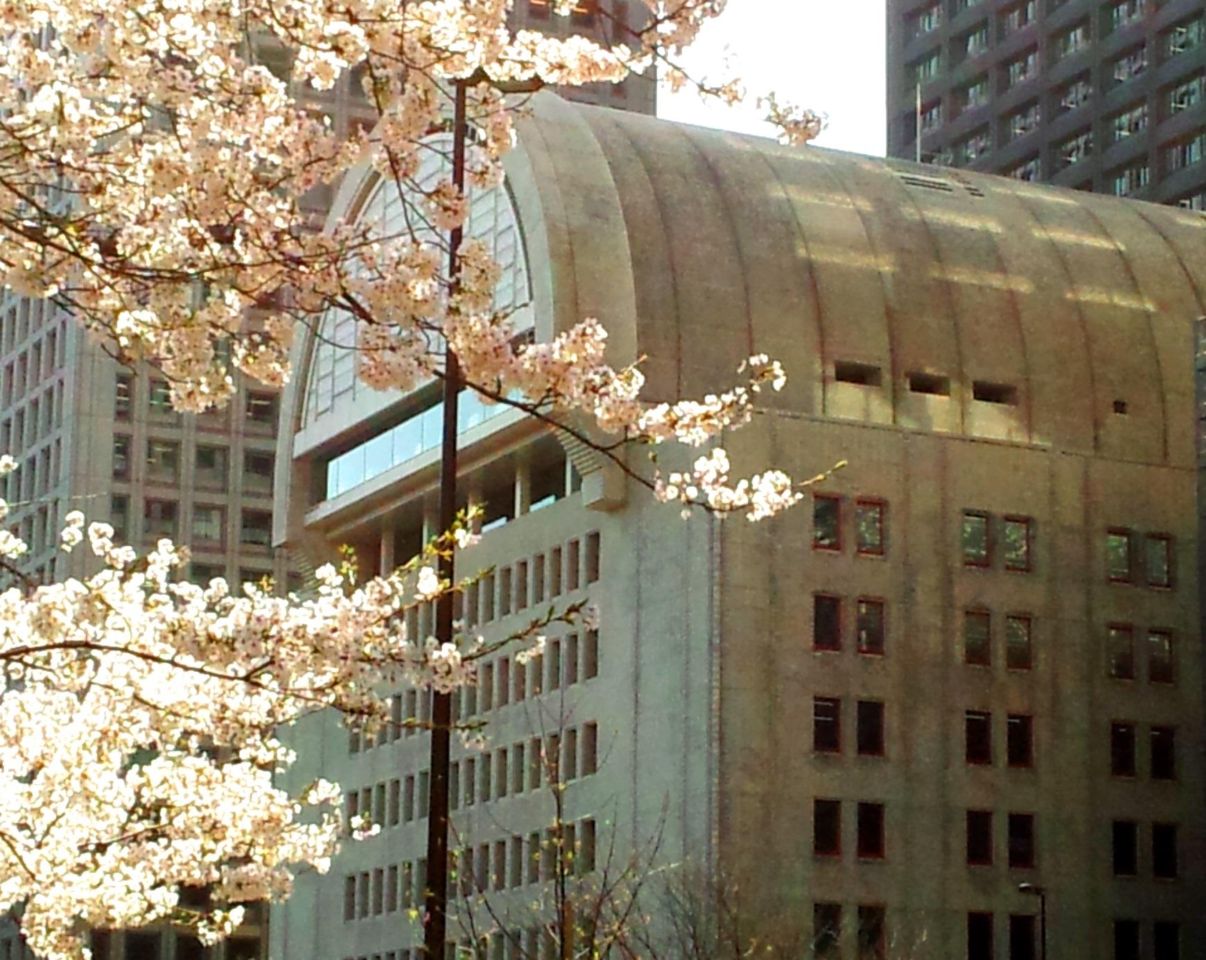 桜とプレスセンタービル