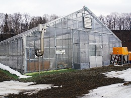 36.s-DSC01131-trimmed-greenhouse2