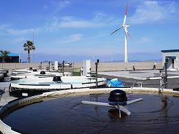 20-DSC02535-風車と藻