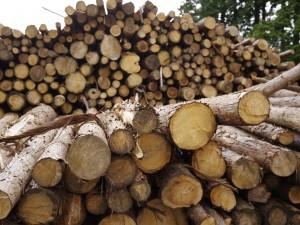 04 木質バイオマス利活用